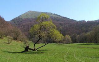 Фото бесплатно трава, равнина, земля