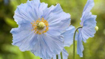Бесплатные фото цветок,тычинка,стебель,пестик,лепестки,зелень,лето