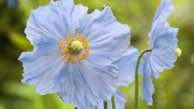 Фото бесплатно цветок, тычинка, стебель