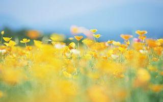Бесплатные фото цветы, полевые, лепестки, желтые, стебли, зеленые