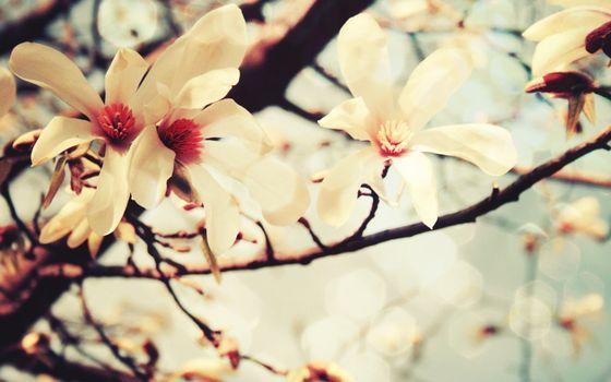 Фото бесплатно цветы, листья, лепестки