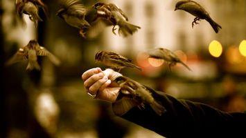 Фото бесплатно воробьи, птички, маленькие