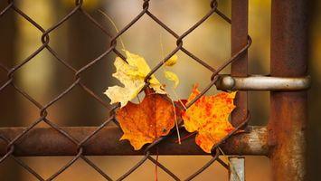 Заставки забор,трубы,сетка,рабица,листь,сухие,разное