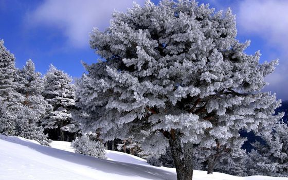 Заставки зима, склон, снег