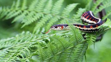 Заставки змея,красная,полосатая,ползут,ветка,зеленая,животные