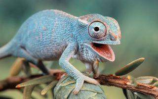 Фото бесплатно ящер, фауна, ящерица