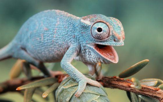 Бесплатные фото ящер,фауна,ящерица,ветка,природа,хамелеон,макро