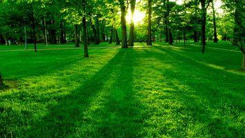 Фото бесплатно парк, люди, трава