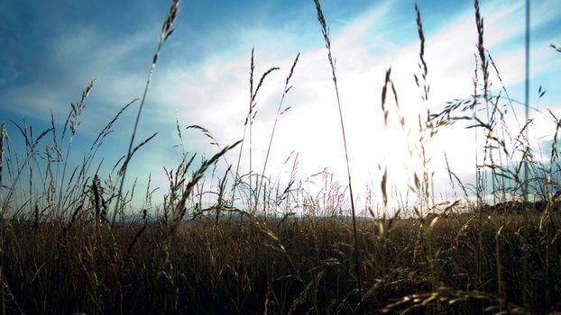 Фото бесплатно пшено, поле, трава