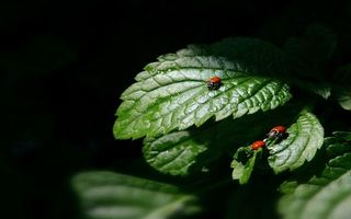 Photo free ladybugs, leaves, family