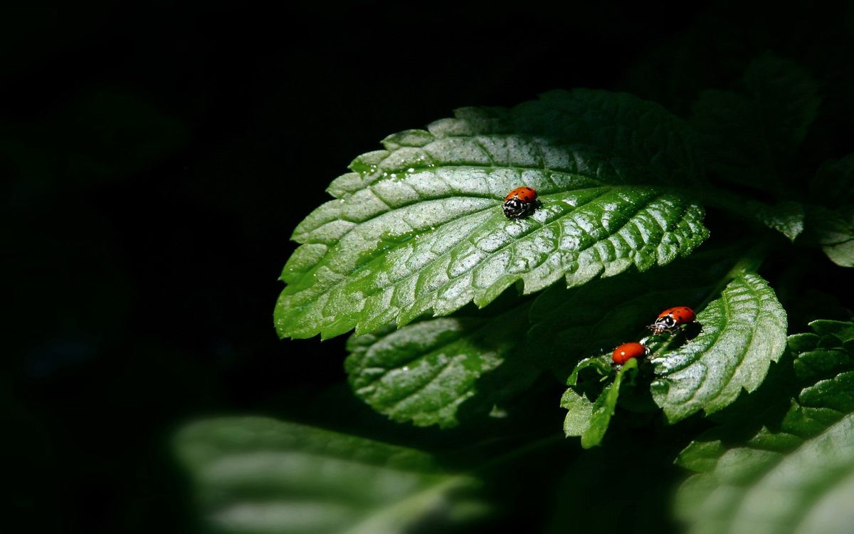 Free photo ladybugs, leaves, family - to desktop