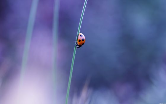 Photo free ladybird, one, small