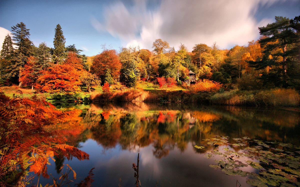 Фото бесплатно деревья, лес, листья, осень, небо, облака, озеро, вода, отражение, природа, природа