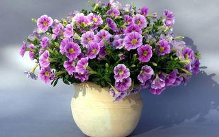 Бесплатные фото горшок,лепестки,пестики,тычинки,листья,тень,цветы