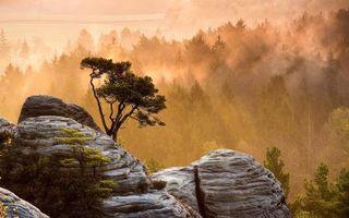 Бесплатные фото камни,мох,лес,деревья,туман,дымка,природа