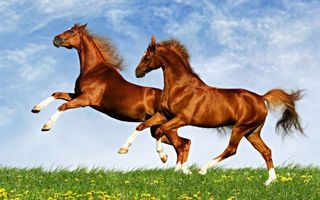 Заставки кони, лошади, красота, грация, морды, уздечки, гривы, хвосты, трава