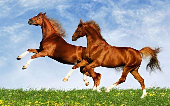 Фото бесплатно кони, лошади, красота