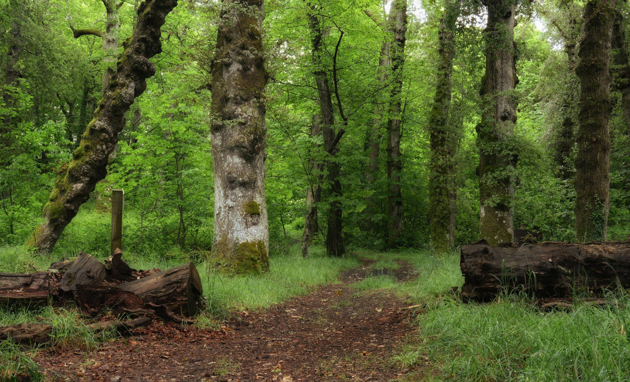 Обои лес, деревья, поляна, дорога