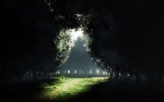 Photo free trees, glade, path