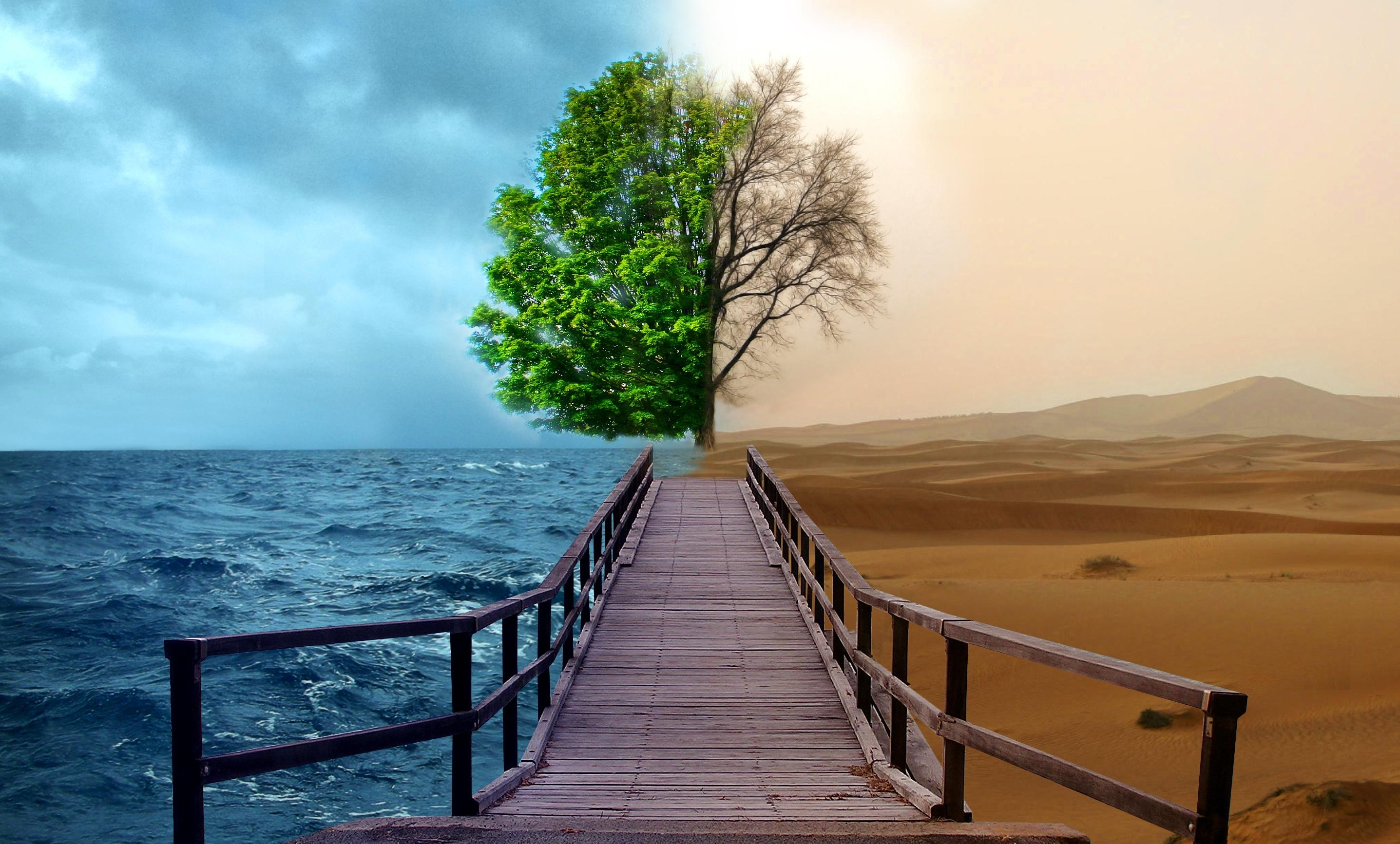 мостик, дерево, пустыня