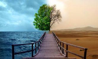 Бесплатные фото мостик,дерево,пустыня,дюны,море,волны,небо