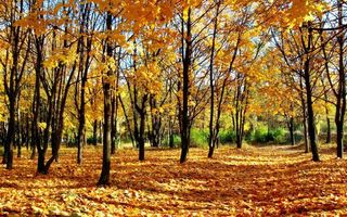 Бесплатные фото осень,листья,желтые,деревья,трава,зеленая,природа
