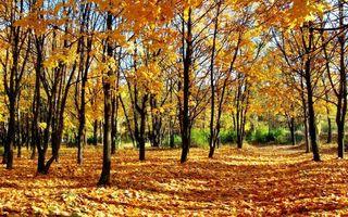 Фото бесплатно осень, зеленый, природа