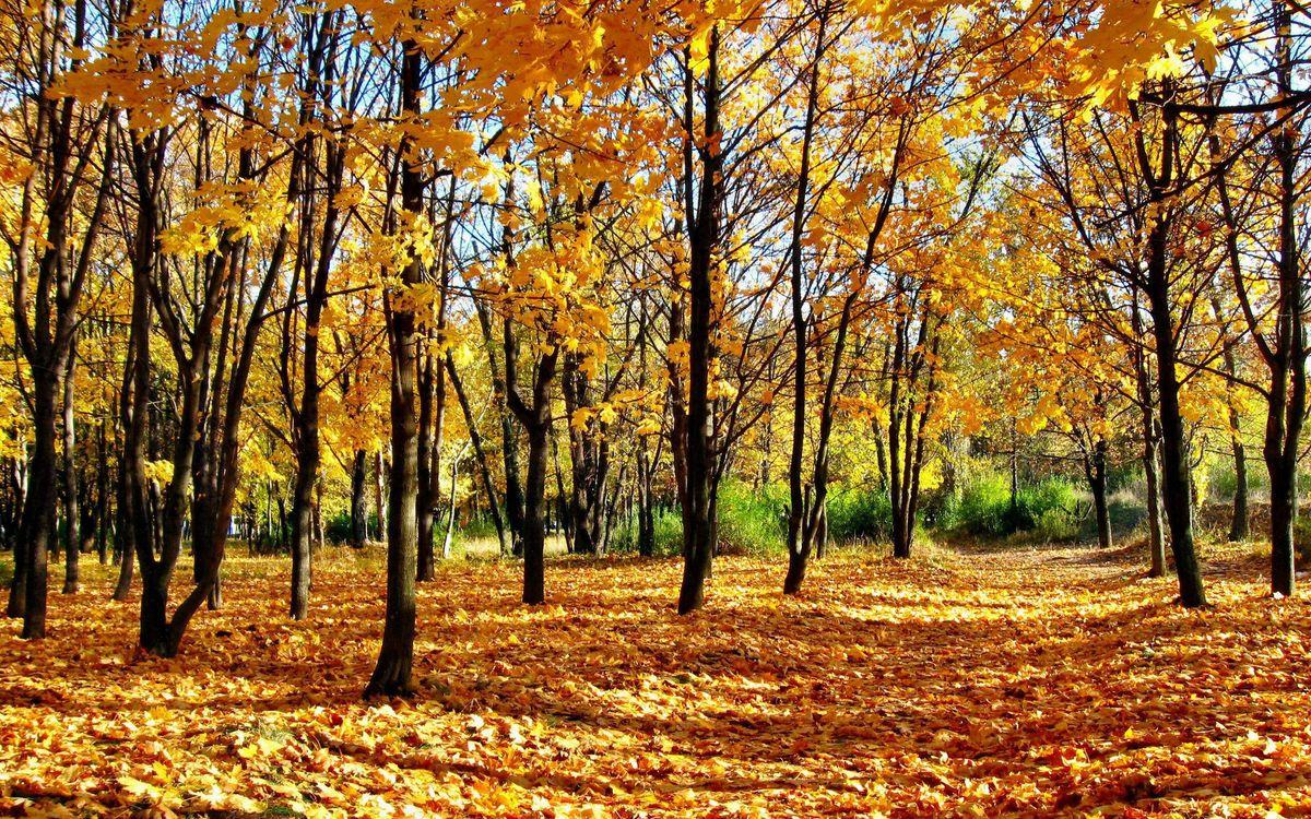 Фото бесплатно осень, листья, желтые, деревья, трава, зеленая, природа, природа
