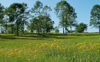 Фото бесплатно поле, деревья, березы