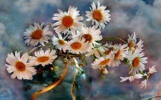 Бесплатные фото ромашки, лепестки, бутоны, цветы, ваза, букет, картина