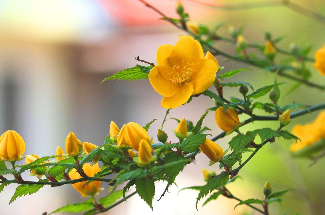 Фото бесплатно цветок, желтый, листья, ветки, лепестки, бутоны, дерево, лето, тепло, цветы, цветы