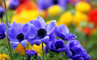 Photo free flowerbed, grass, petals