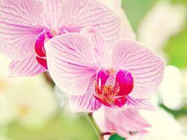 Фото бесплатно цветы, природа, розовый