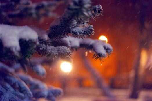 Бесплатные фото ветви елки,снег,сугробы,фонари,парк