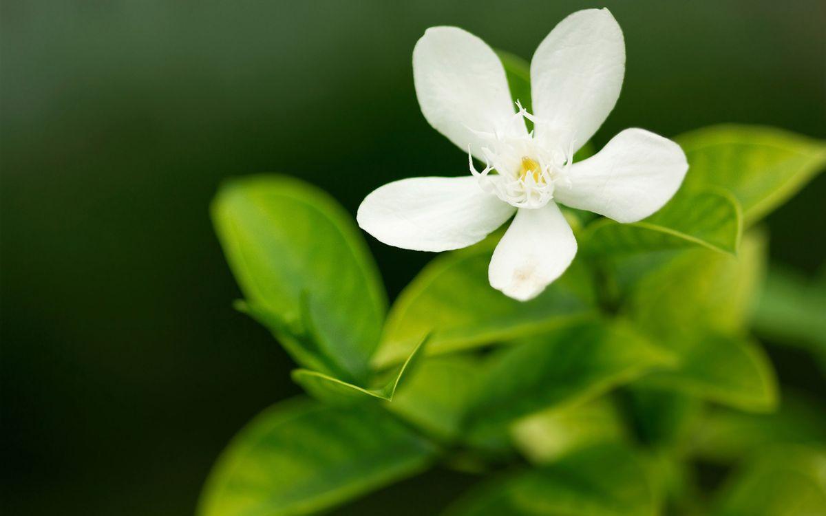 Фото зелень цветы макро - бесплатные картинки на Fonwall
