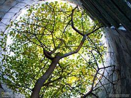 Фото бесплатно дерево, колодец, листва