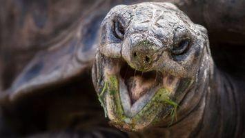 Фото бесплатно черепаха, пасть, нос