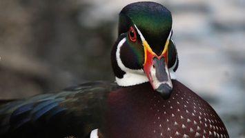 Photo free head, green, beak