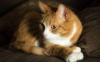 Бесплатные фото кот, рыжий, морда, глаза, желтые, лапы, кошки