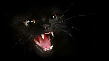 Обои кот, зубы, пасть, глаза, усы, ярость, животные