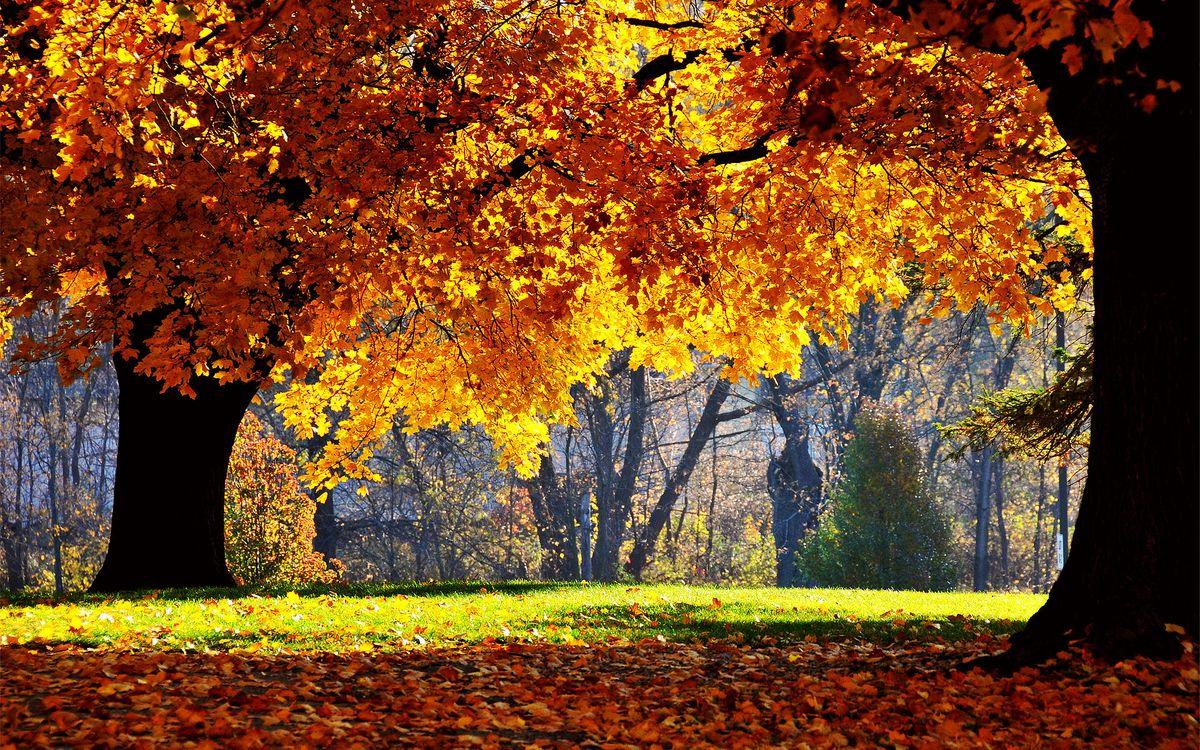 Фото бесплатно осенний парк, деревья, листопад, старые деревья, лучи солнца, листья, природа, природа