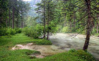 Фото бесплатно кусты, лес, река