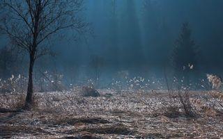 Фото бесплатно осень, деревья, трава
