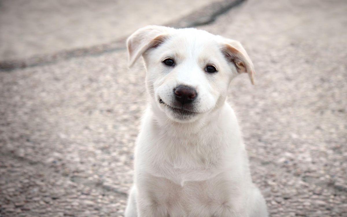 Фото бесплатно Шэгги, собаки, порода - на рабочий стол