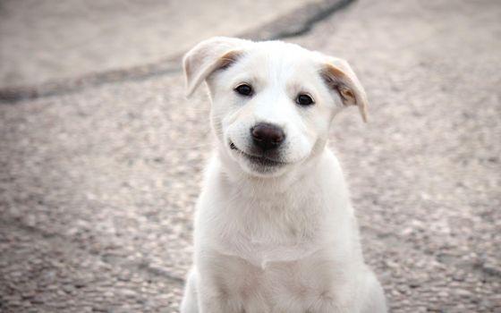 Photo free shaggy, dogs, breed
