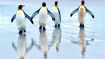 Бесплатные фото пингвины,крылья,клюв,красный,вода,лапы,животные
