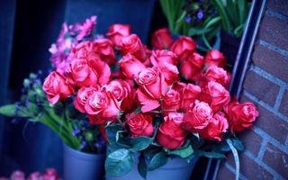 Обои розы, букеты, вазы, горшки, охапки, лепестки, аромат, листья, шипы, цветы