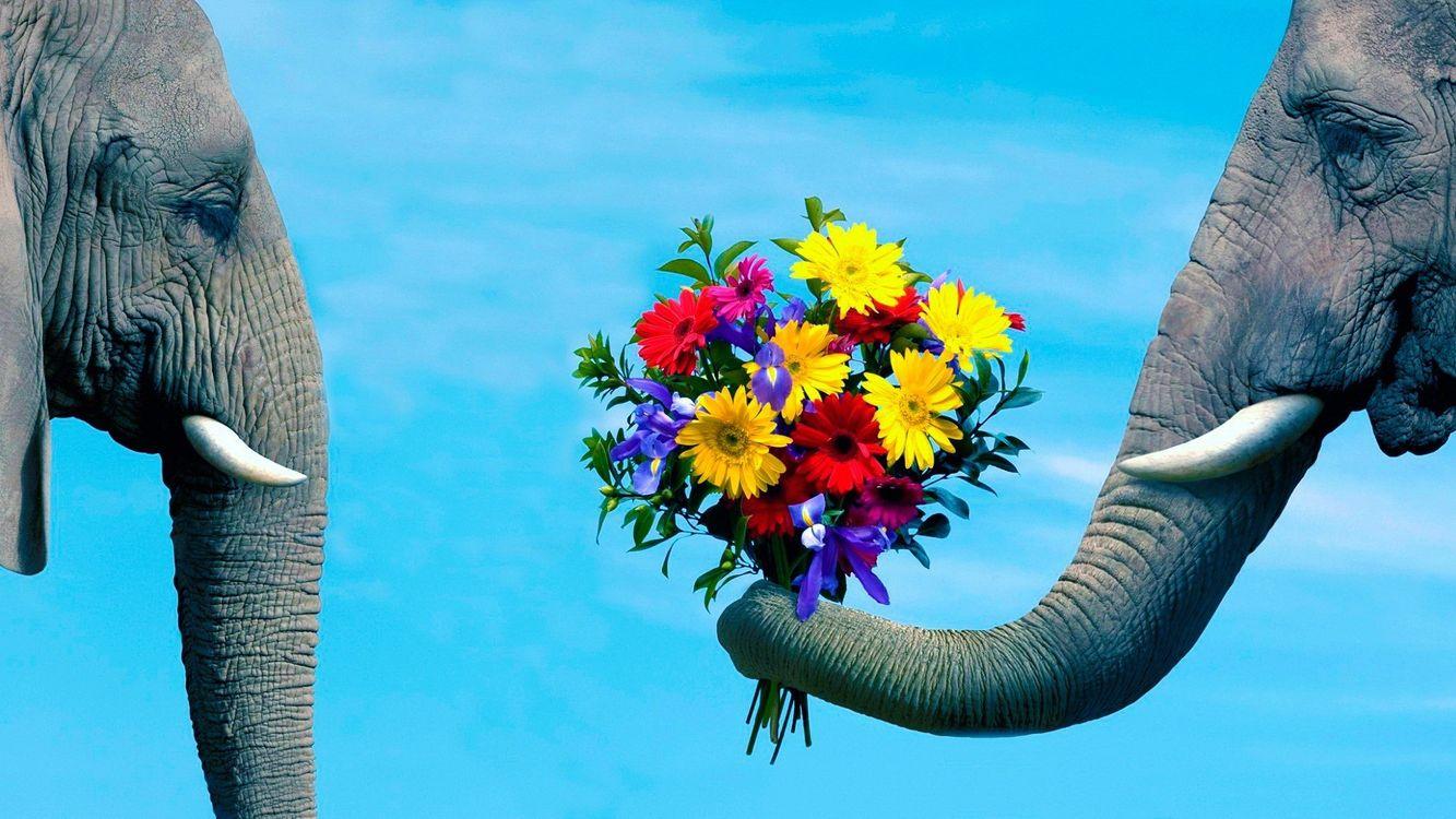 Фото бесплатно слоны, хоботы, бивни - на рабочий стол