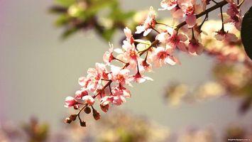 Фото бесплатно цветы, дерево, ветка
