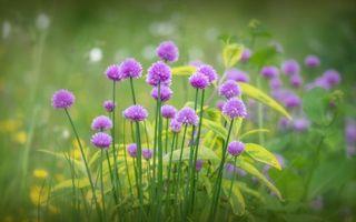 Photo free flowers, purple, stems